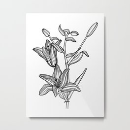 Lily Botanical Illustration Metal Print