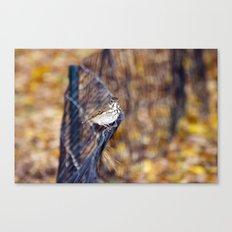 Hermit Thrush in Autumn Canvas Print