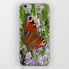 A Peacock Butterfly On A Laveder Bush iPhone & iPod Skin