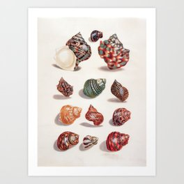 Unknown Title by Maria Sibylla Merian // Vintage Sea Shells Colorful Shapes and Sizes with Shadows Art Print
