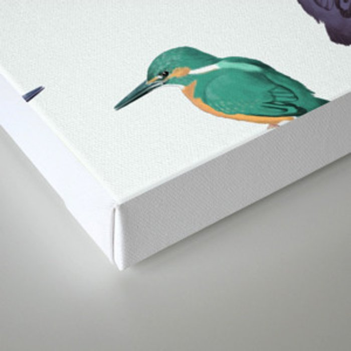 Colored kingfishers Canvas Print