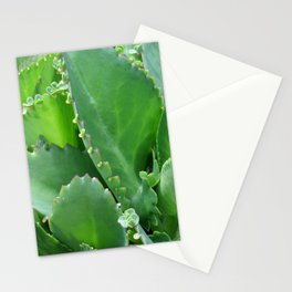 Succulent Leaves Stationery Cards