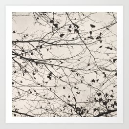 boughs pale Art Print