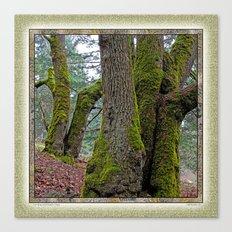 TWO BIG LEAF MAPLE TREES Canvas Print