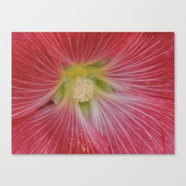 Heart of a Hollyhock Blossom Canvas Print
