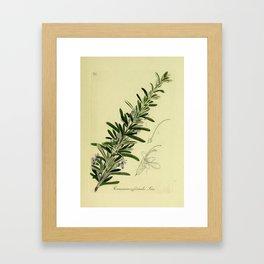 Botanical Rosemary Framed Art Print