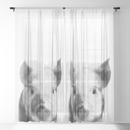 Black and white pig portrait Sheer Curtain