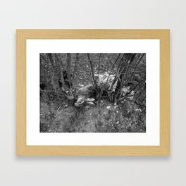 Dead Rabbit Dead. Framed Art Print