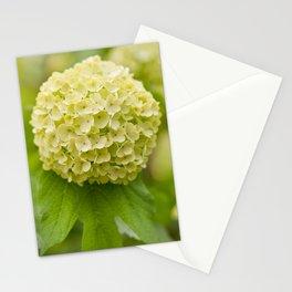 Viburnum opulus Roseum inflorescence Stationery Cards