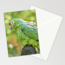 Tropical Parrot at Zoo, Guayaquil Stationery Cards