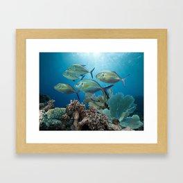 Bluefin Trevally Framed Art Print