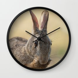 An Eye on You Eastern Cottontail Rabbit Wall Clock