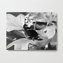 B & W Butterfly On a Leaf Metal Print