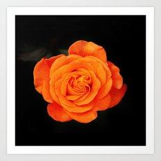 Romantic Rose Orange Art Print