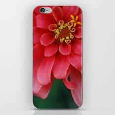 Summer's Jewel iPhone Skin