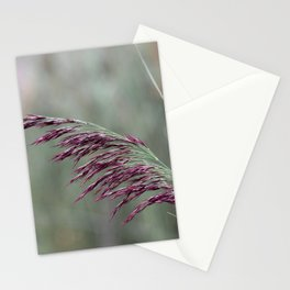 Common reed flower stalk Stationery Cards