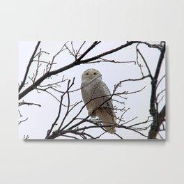 Snowy Owl in the Treetop Metal Print
