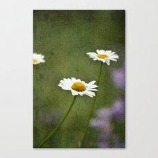 Daisy Chain 2 Canvas Print