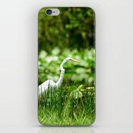 Great Egret in a Green Field iPhone Skin