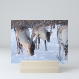 reindeer in the snow Mini Art Print