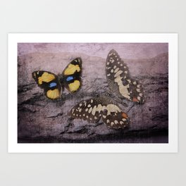 Butterflies Vintage Art Print