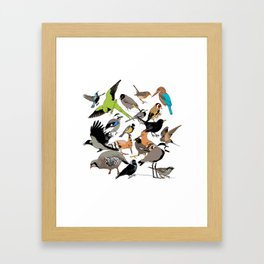 color birds Framed Art Print