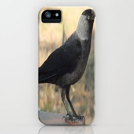 Side View Of A Wild Jackdaw iPhone Case