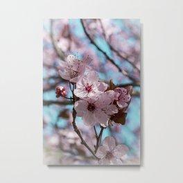 Sakura.Cherry Blossom Metal Print