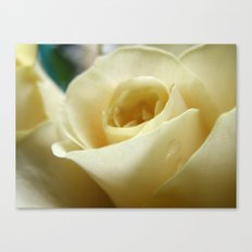 Yellow Roses #11 Canvas Print