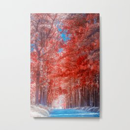 Autumn forest in mist path Metal Print