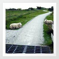 Sheep relaxing near the road Art Print