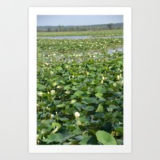 Amana Lilly Pond Art Print