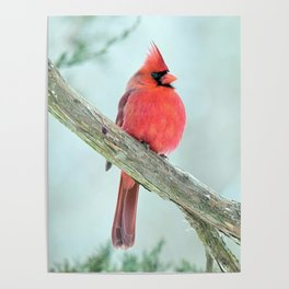 Elegant Cardinal Poster