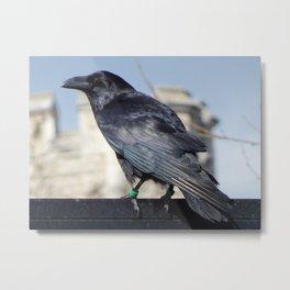 Tower Raven Standing Guard Metal Print