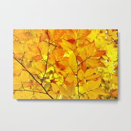 Indian Summer - Yellow Autumn Fall Leaves Metal Print