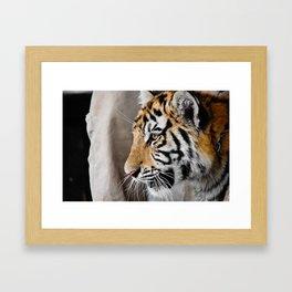 Tiger cub in profile Framed Art Print