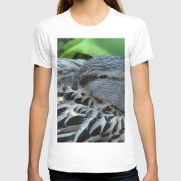 Sleepy mallard duck close-up 2 T-shirt