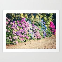 Hydrangea Lane Art Print