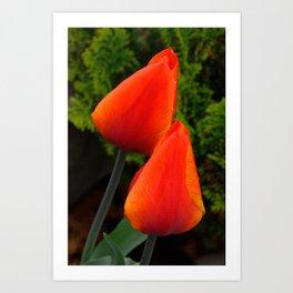 Red Flame Tulip by Teresa Thompson Art Print