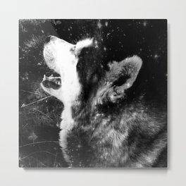 Siberian Husky - my shining star Metal Print