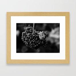 Black Bug Framed Art Print