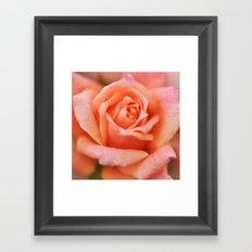 A Time to Bloom... Framed Art Print