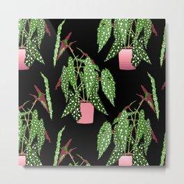 Polka Dot Begonia Potted Plants in Black Metal Print
