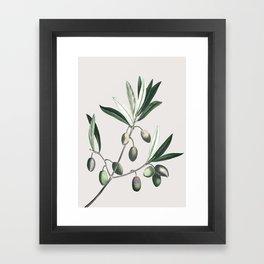 Olive Tree Branch Framed Art Print