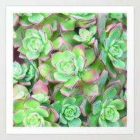succulents Art Prints featuring Succulents  by Lisa Argyropoulos