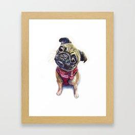 Frankie the Pug #114 Framed Art Print