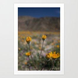 Desert in Bloom Art Print