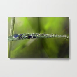 A Riot of Early Morning Watrlens Dewdrops Metal Print