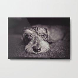 DACKEL DOG#5 Metal Print