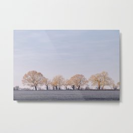 Row of trees in a frosty field lit by the sunrise. Hilborough, Norfolk, UK. Metal Print